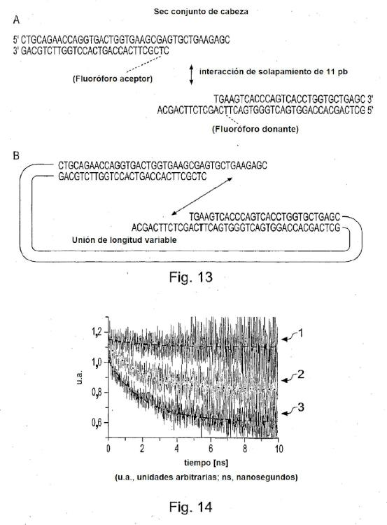 Método para medir la afinidad de biomoléculas.