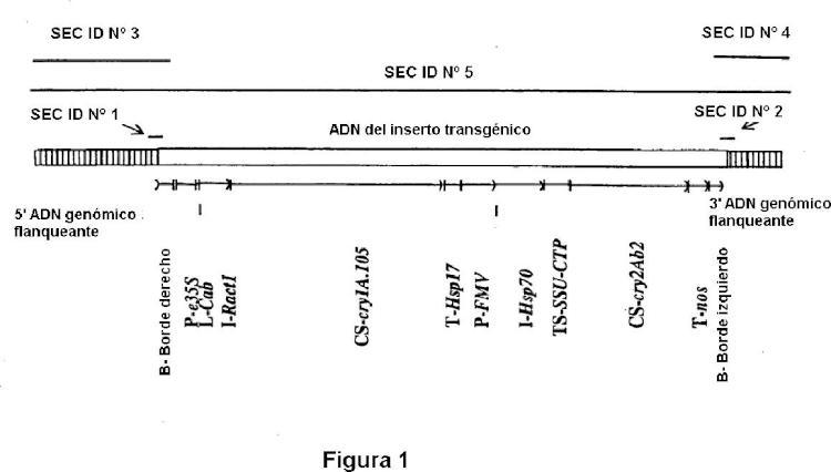 Planta y semilla de maíz correspondiente al evento transgénico MON89034 y procedimientos para su detección y uso.