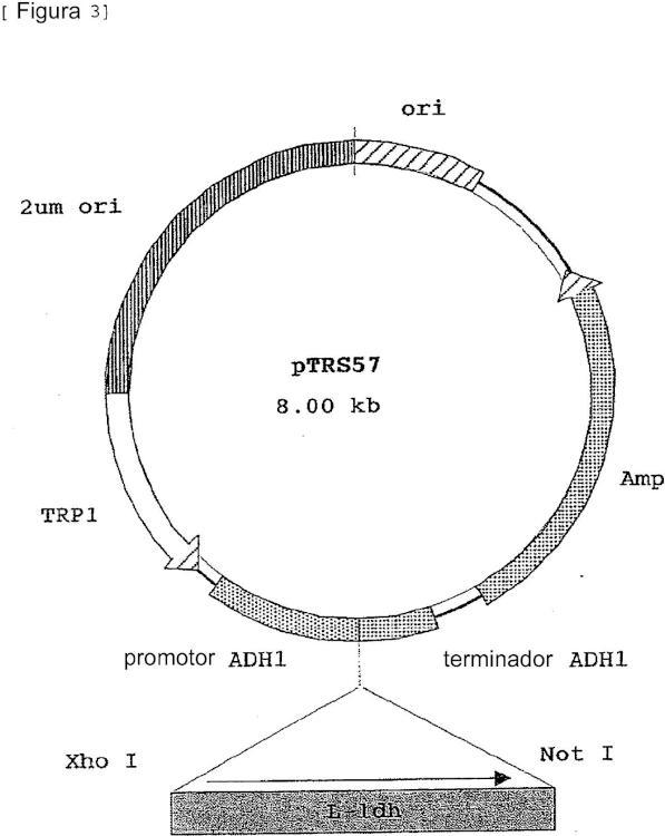 Levadura y procedimiento de producción de ácido L-láctico.