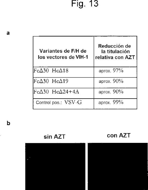 Pseudotipificación de vectores retrovíricos, métodos para su producción y su uso para la transferencia de genes dirigida y la selección de alta capacidad de procesamiento.