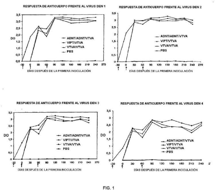 Inducción de una respuesta inmunitaria frente al virus del dengue usando un enfoque de sensibilización-refuerzo.