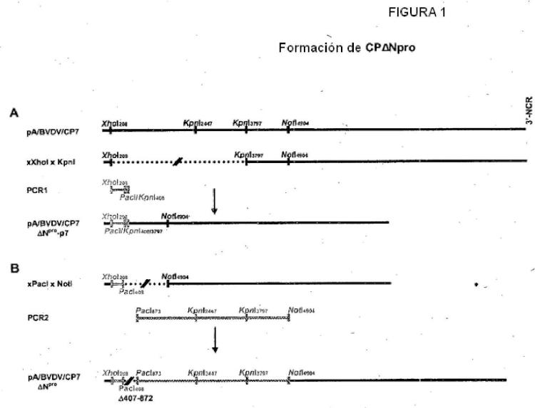 Mutante del Virus de la Diarrea Viral Bovina para uso en una vacuna.