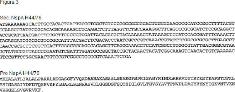 Procedimiento de replegamiento de proteína NSPA de Neisseria.