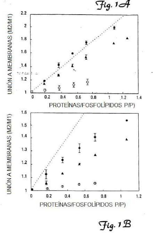 Polipéptidos dependientes de la vitamina K modificados.