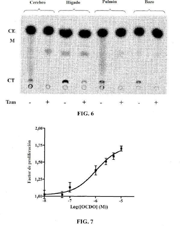 Métodos para la determinación del estado oncogénico de una célula, sus aplicaciones, y métodos para el tratamiento del cáncer.