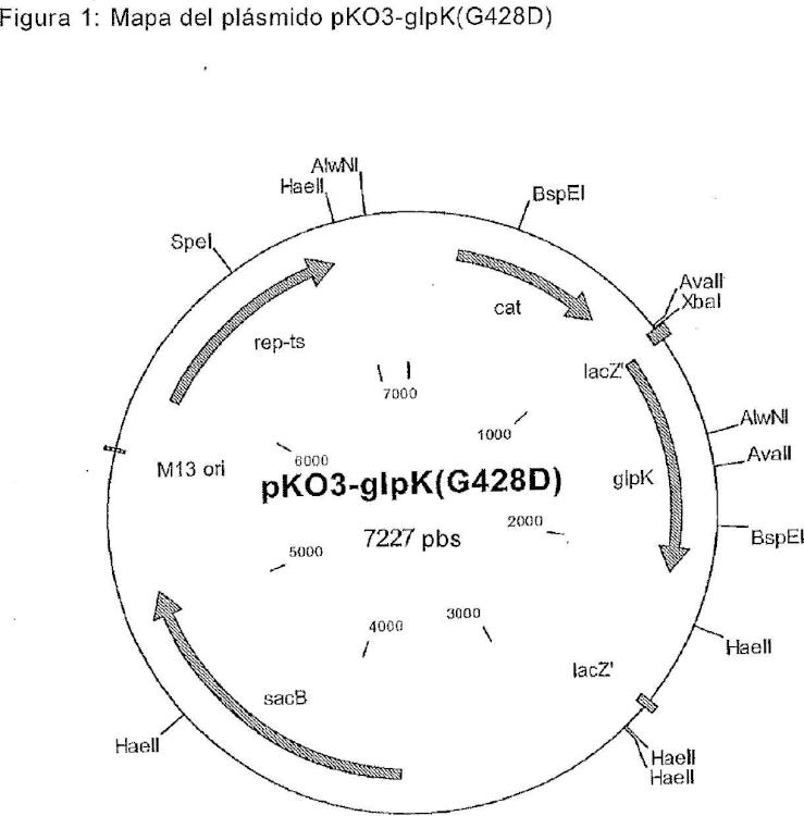 Procedimiento para la preparación de L-aminoácidos utilizando cepas de la familia Enterobacteriaceae.
