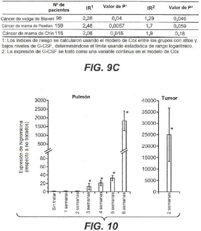 Inhibición de metástasis tumoral usando anticuerpos anti-G-CSF.