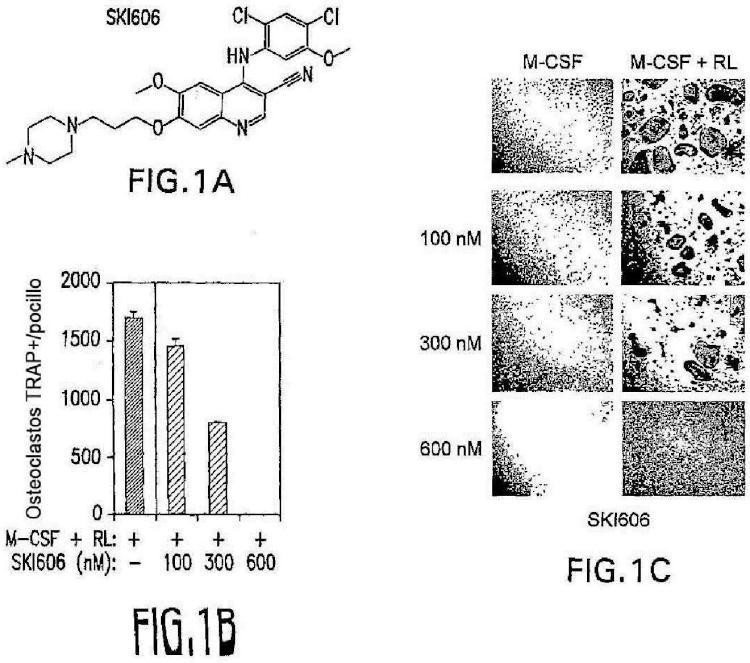 SKI606 como inhibidor de la cinasa Src para el tratamiento de lesiones osteolíticas.