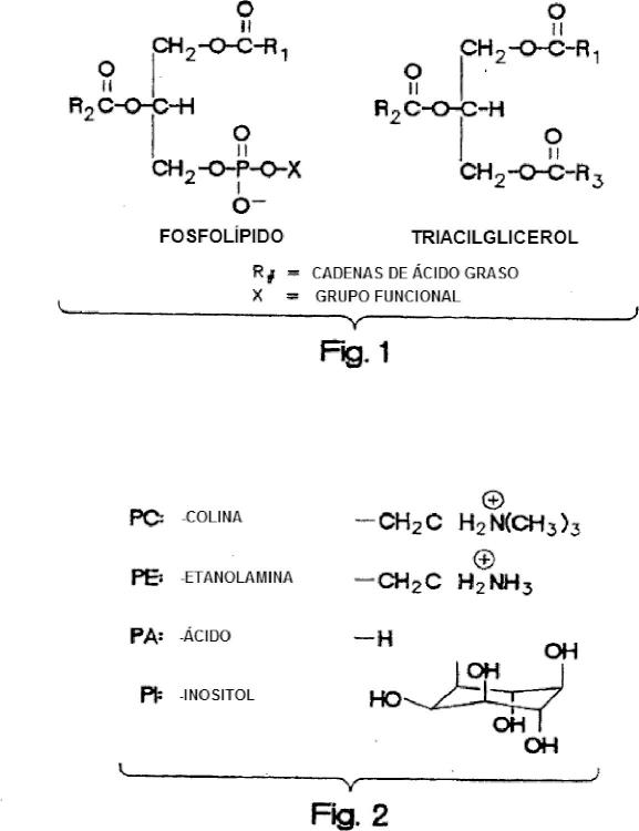 Desgomado enzimático utilizando una mezcla de fosfolipasas PLA y PLC.