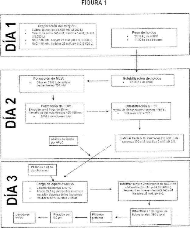 Formulaciones inhaladas de doble acción, que proporcionan un perfil de liberación tanto inmediata como sostenida.