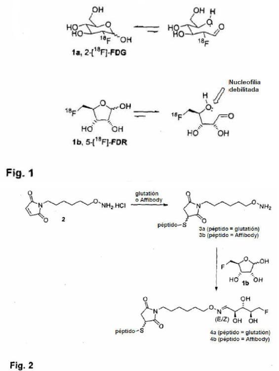 Método de marcaje de una molécula biológicamente activa con una 5-fluoro-5-desoxipentosa o una 3-fluoro-3-desoxipentosa.