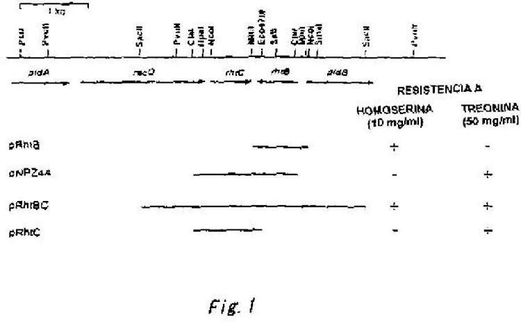 Método para producir L aminoácidos.