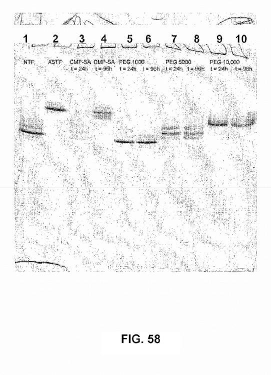 Remodelación y glicoconjugación de la hormona del crecimiento humano (hGH).