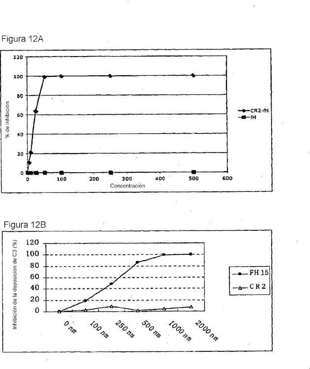 Direccionamiento del factor H del complemento para el tratamiento de enfermedades.