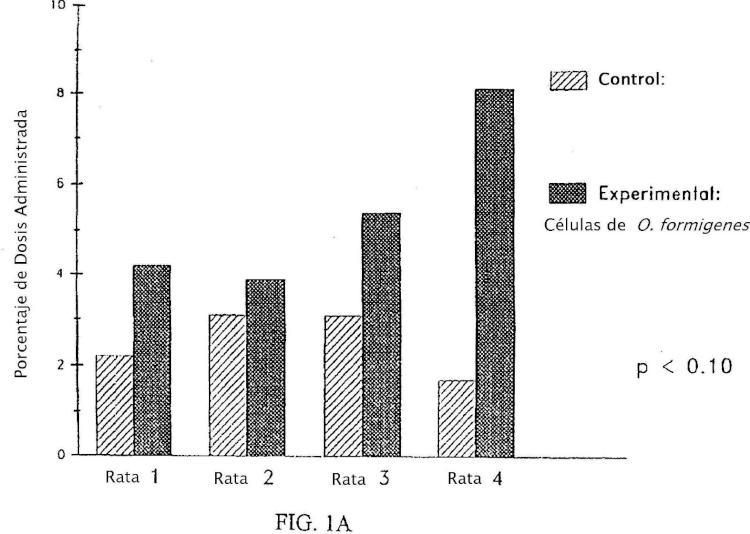 Composiciones y métodos para tratar o prevenir una enfermedad relacionada con el oxalato.