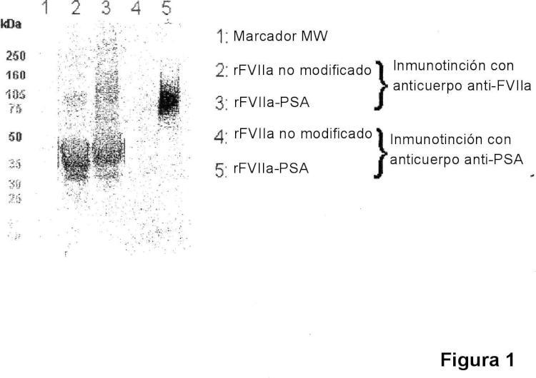 Conjugado de factor viia - ácido (poli)siálico con una vida media in vivo prolongada.