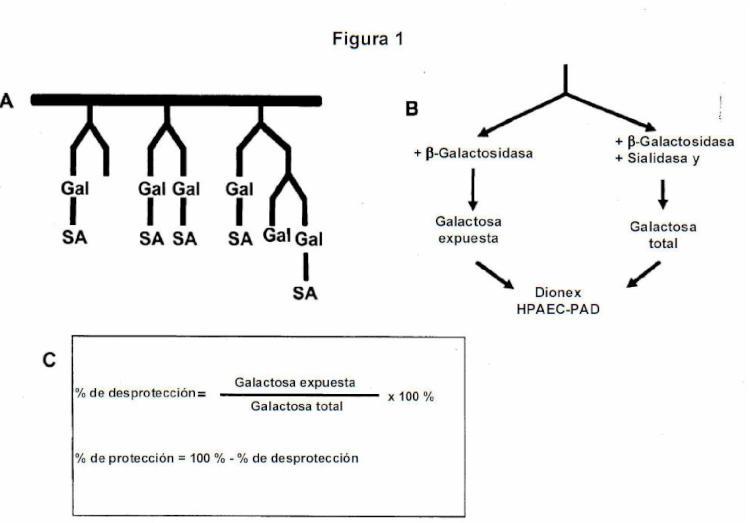Procedimientos de producción recombinante de glucoproteínas.