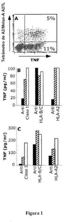 Nuevo péptido antígeno del melanoma y usos del mismo.