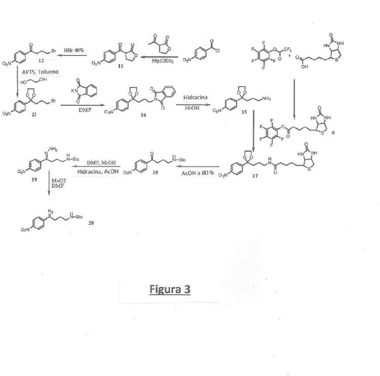 Reactivos de marcado que llevan funciones diazo y nitro, procedimientos de síntesis de tales reactivos y procedimientos de detección de moléculas biológicas.