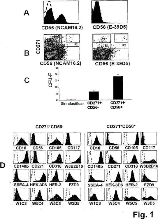 Aislamiento y/o identificación de células madre con potencial de diferenciación adipocitario, condrocitario y pancreático.