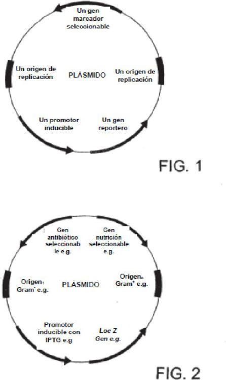 Indicador biológico desarrollado mediante ingeniería genética.