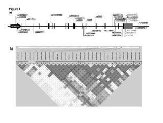 Polimorfismos genéticos combinados de LDLR e IL28B para la predicción de la respuesta al tratamiento con interferón pegilado más ribavirina en pacientes infectados con el virus de la hepatitis C.