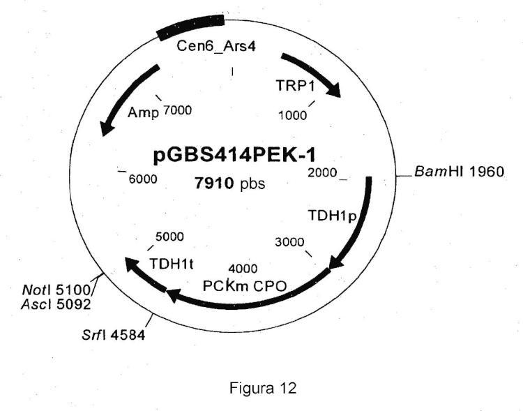 Producción de ácido succínico en una célula eucariota.