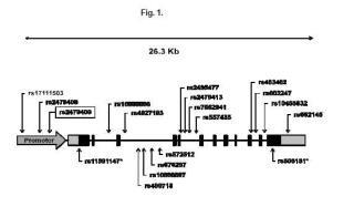 Método de obtención de datos útiles para predecir o pronosticar la respuesta al tratamiento con interferón pegilado más ribavirina en pacientes infectados por el virus de la hepatitis C genotipo 3.
