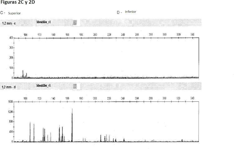Método de amplificación directa a partir de muestras de ácido nucleico en bruto.