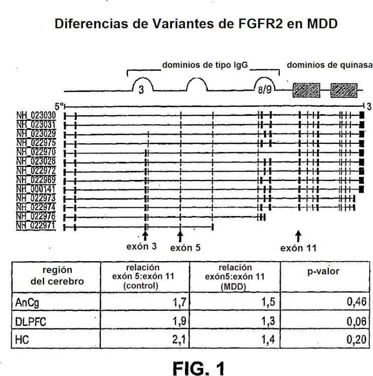 Métodos relacionados con FGF2 para diagnosticar y tratar la depresión.