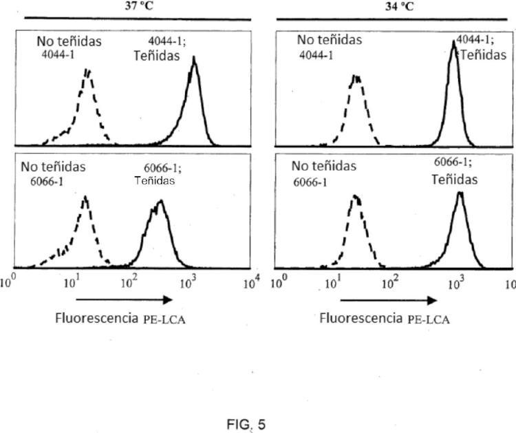 Células de fucosilación deficiente.