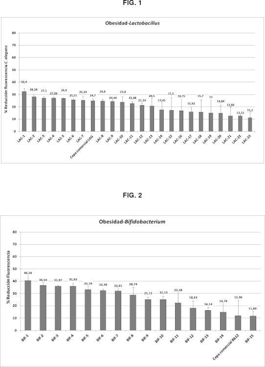 Nueva cepa de Bifidobacterium animalis subsp. lactis CECT 8145 y su uso para el tratamiento y/o prevención de sobrepeso y obesidad y enfermedades asociadas.