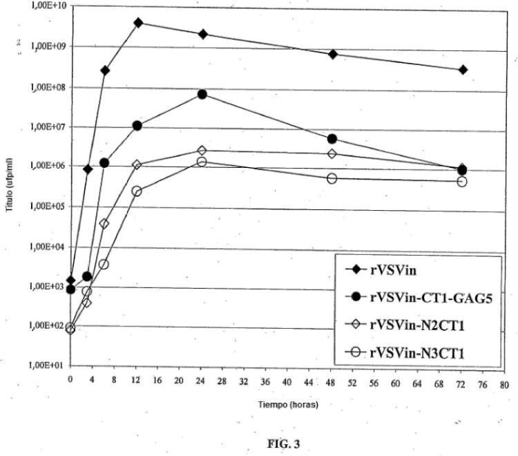 Atenuación sinérgica del virus de la estomatitis vesicular, vectores del mismo y composiciones inmunogénicas del mismo.