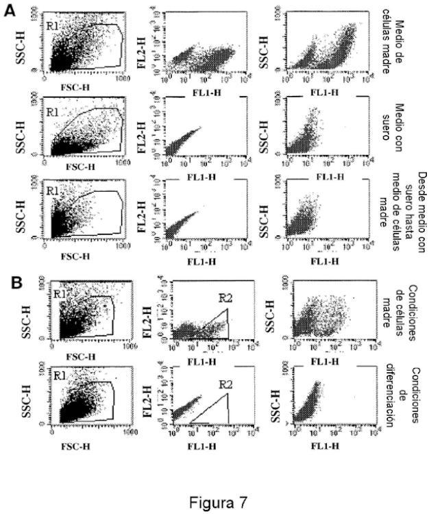 Métodos para identificar, purificar y enriquecer células madre o inmaduras de inicio de cáncer a partir de tumores y uso de las mismas.