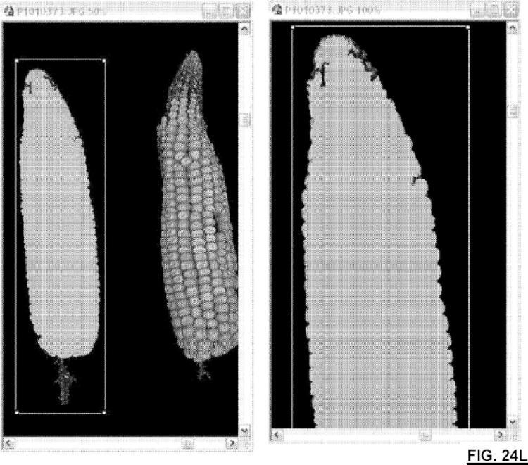 Método para el análisis de imagen digital del maíz.