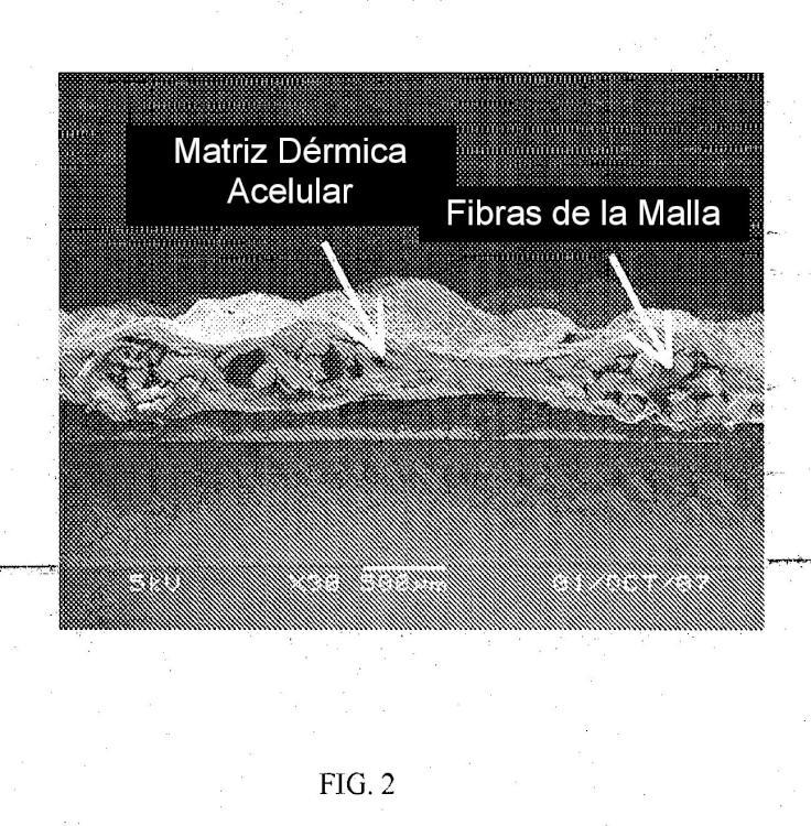Método para producir un adhesivo de matriz acelular.