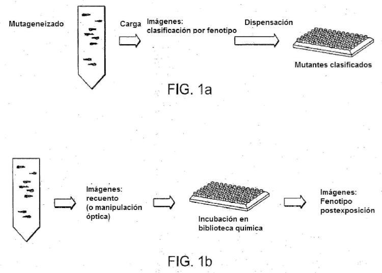 Plataforma de alto rendimiento para cribados subcelulares in vivo en larvas de vertebrados.