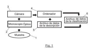 Procedimiento y sistema de visión artificial para la descripción y clasificación de espermatozoides según el estado de su acrosoma.