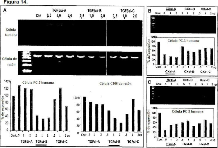 Terapéutica con ARNi multidirigidos para la cicatrización de heridas de la piel sin cicatriz.
