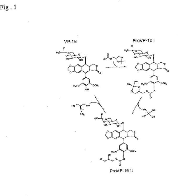 Las podofilotoxinas como agentes antiproliferativos.