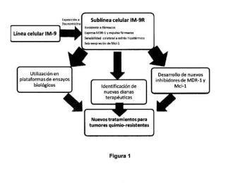 Línea celular tumoral resistente a fármacos IM-9R y su empleo en la búsqueda de nuevos tratamientos anti-tumorales.