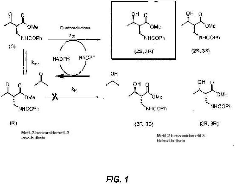 Polipéptidos de cetorreductasa para la producción de acetidinona.