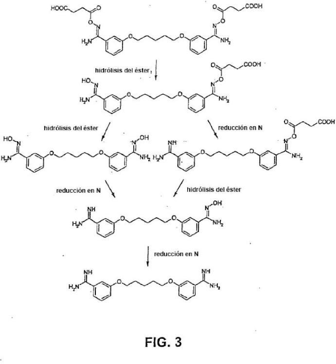 Utilización de ésteres de ácidos amidoxima-carboxílicos y de ésteres de ácidos N-hidroxiguanidino-carboxílicos para la preparación de profármacos.