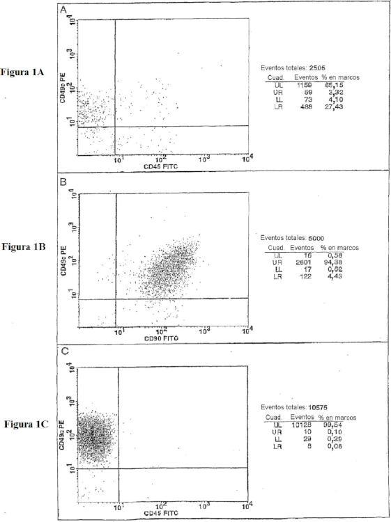 Poblaciones celulares que co-expresan CD49c y CD90.
