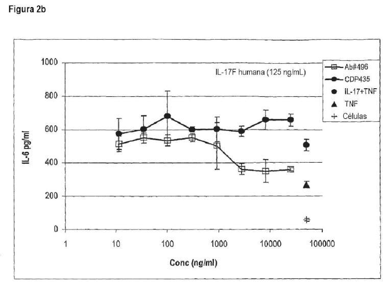 Epítopos de IL-17A e IL-17F y sus anticuerpos específicos.