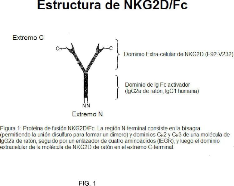 NKG2D-Fc para la inmunoterapia.