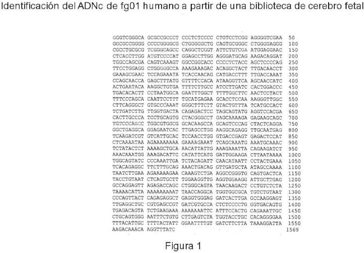 Gen humano fg01 y sus aplicaciones.