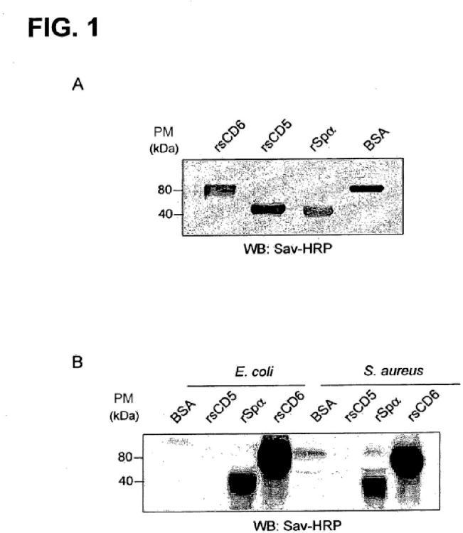 Producto de CD6 para el tratamiento de enfermedades infecciosas y procesos inflamatorios relacionados.