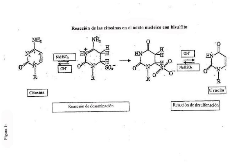 Método mejorado para el tratamiento con bisulfito.