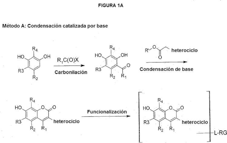 7-Hidroxicumarinas sustituidas con heterociclo reactivas y sus conjugados.